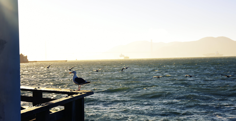 Kostenloses Stock Foto zu bunt, fishermans wharf, hafen, hafn