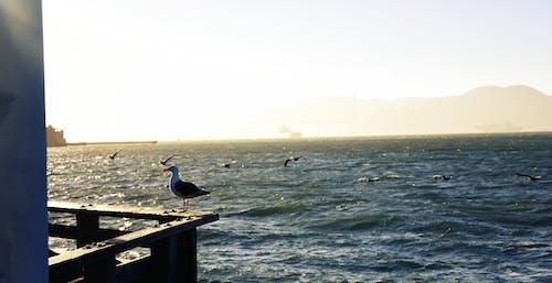 Darmowe zdjęcie z galerii z habour, horyzont, kolorowy, mewa