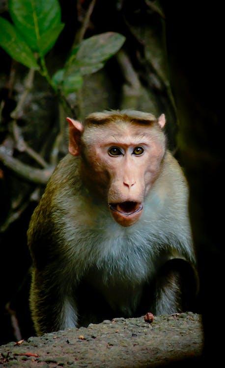 การถ่ายภาพสัตว์, ป่าฝน, ลิง