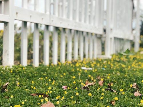 Foto d'estoc gratuïta de alba, bonic, capvespre, flor d'estiu
