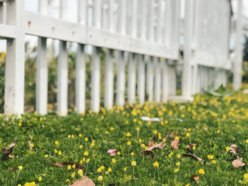 Gratis lagerfoto af grøn, gul, natur, naturfotografering