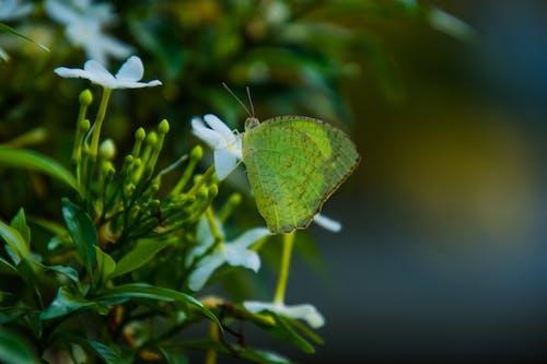 Foto profissional grátis de borboleta, borboleta em uma flor, ecológico, fotografia da natureza