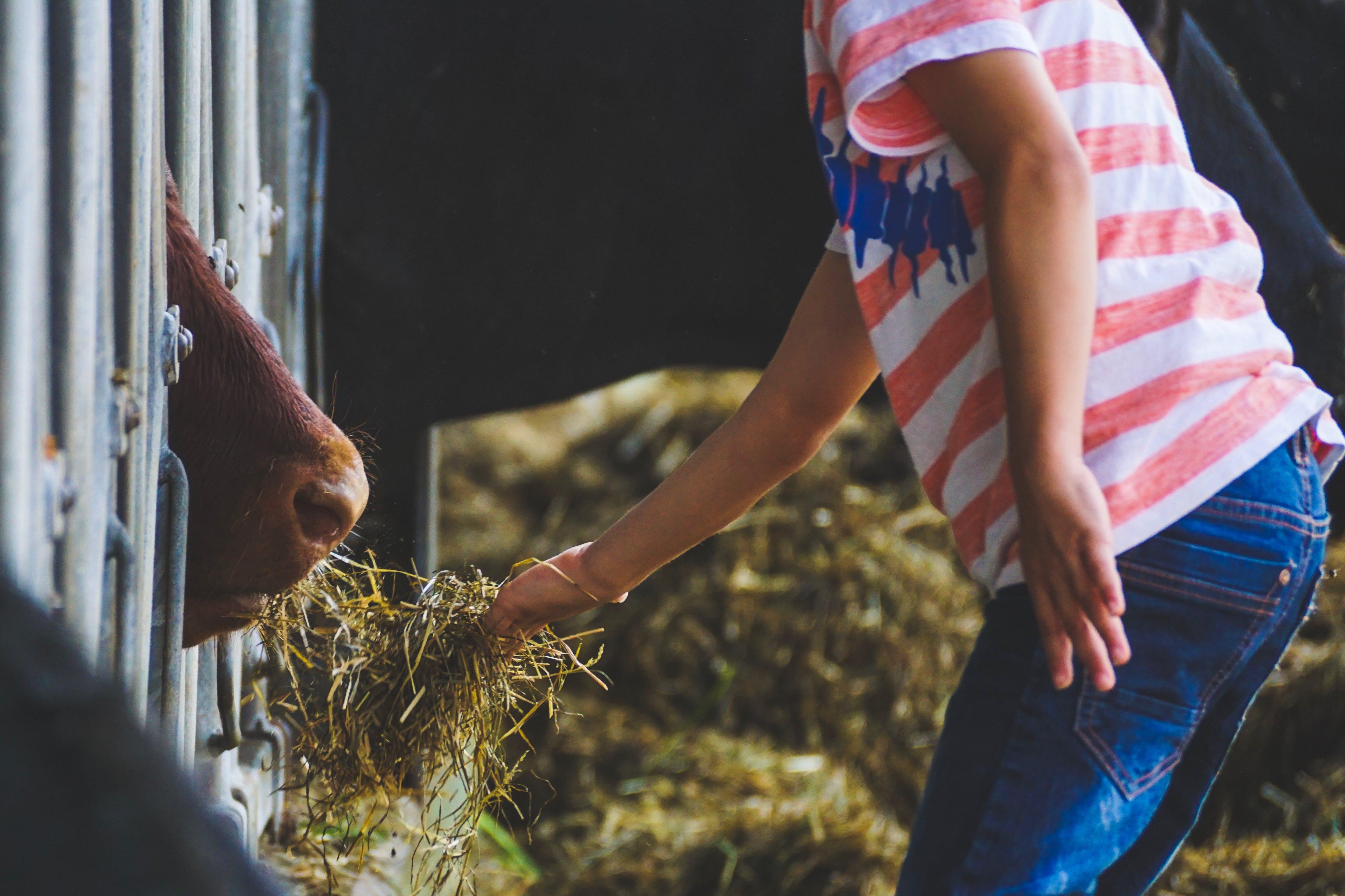 Δωρεάν στοκ φωτογραφιών με αγρόκτημα, άνθρωπος, ζώο, σίτιση
