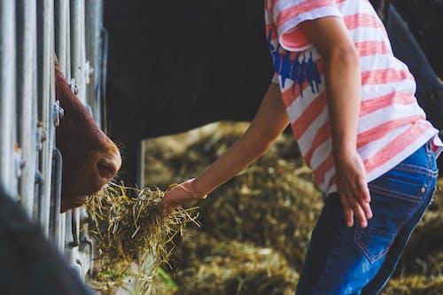 농장, 동물, 먹여주는, 사람의 무료 스톡 사진