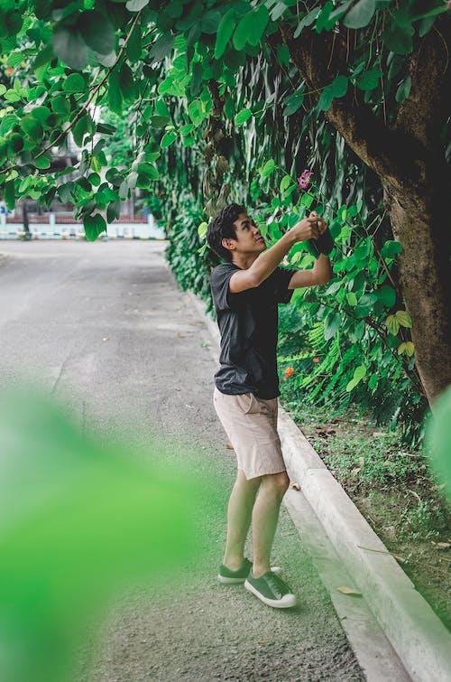 Kostenloses Stock Foto zu baum, erholung, freizeit, lebensstil