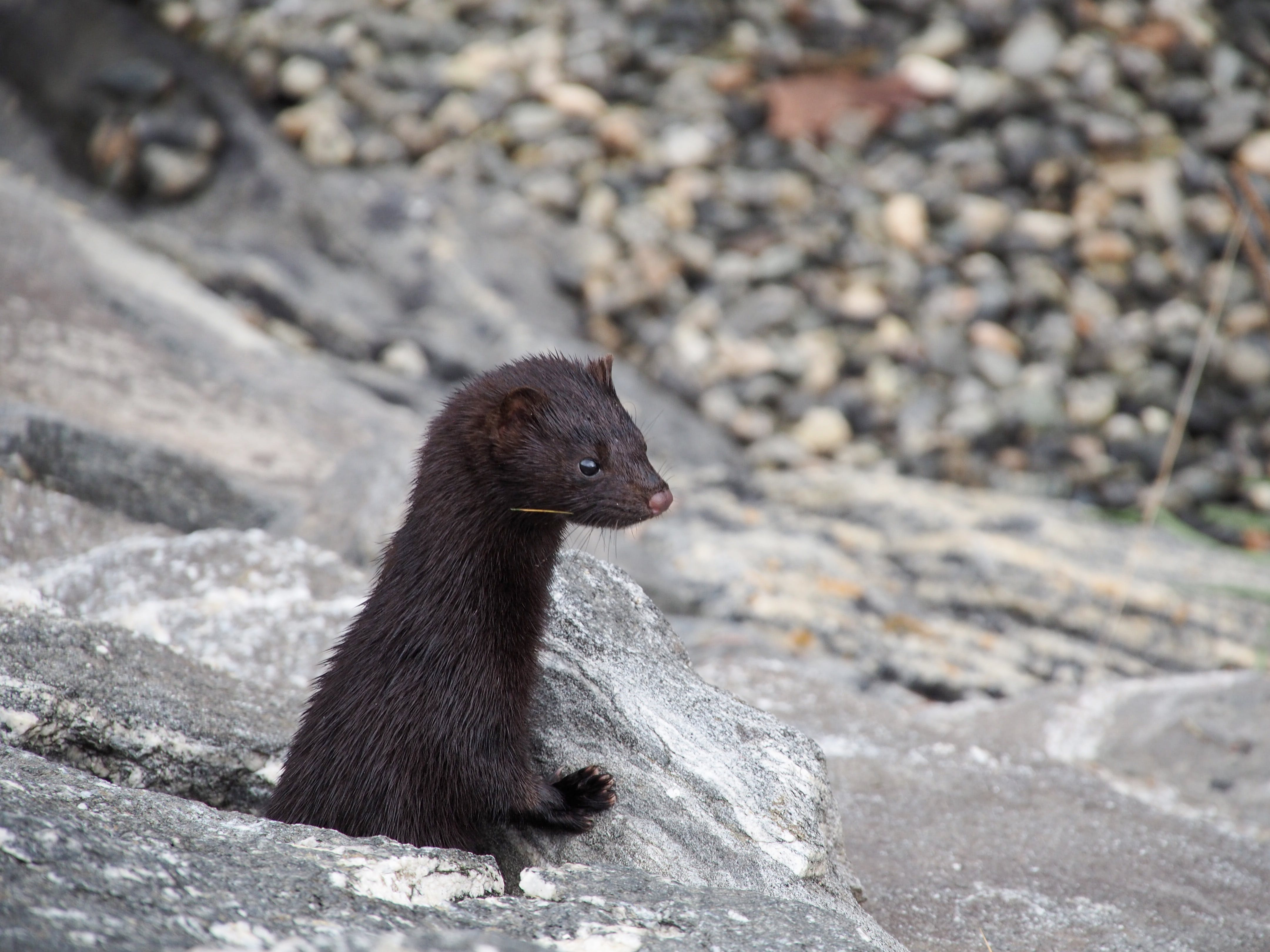 Free stock photo of animal, oceanshore, shore