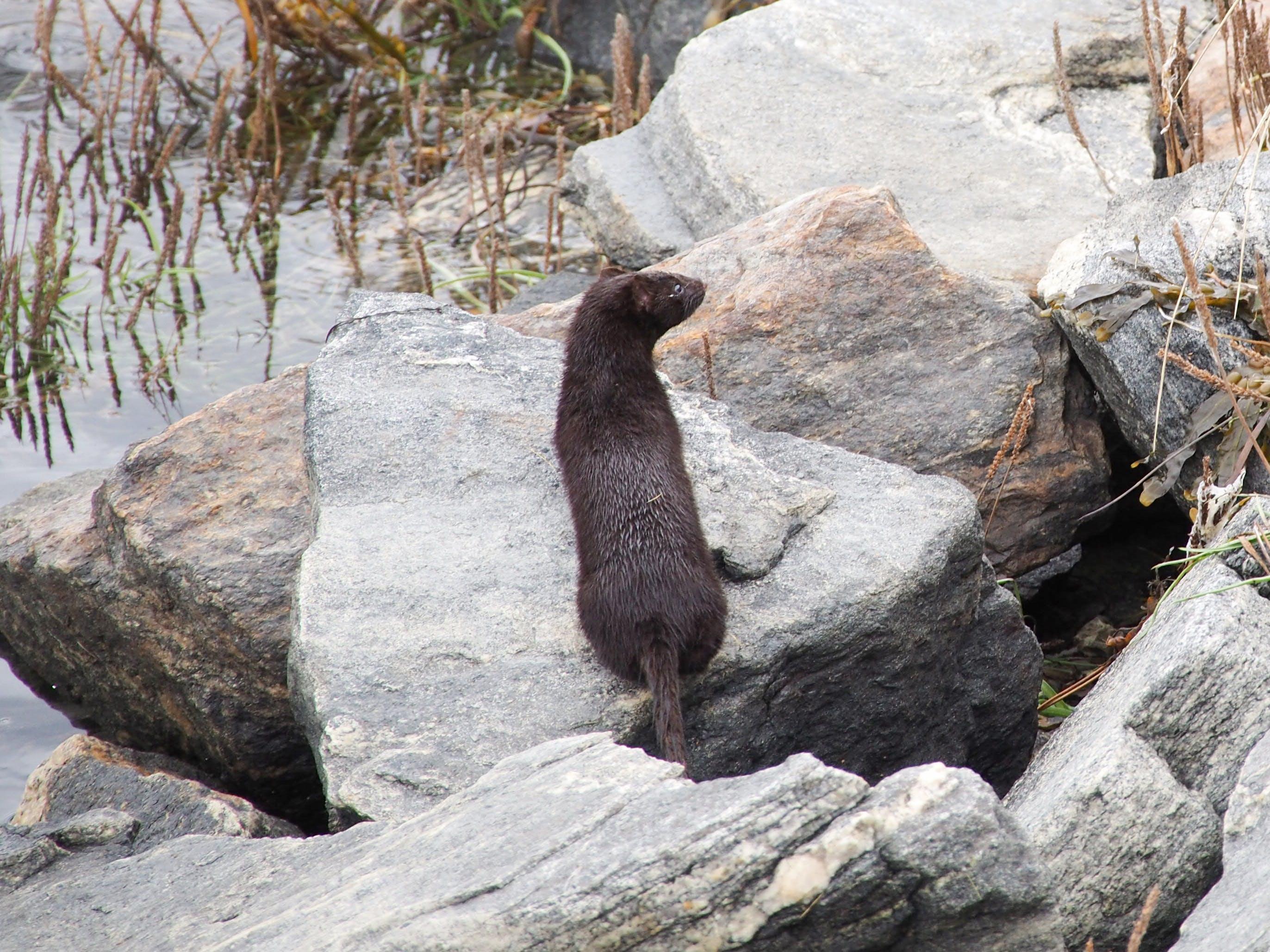 Free stock photo of animal, seashore, shore