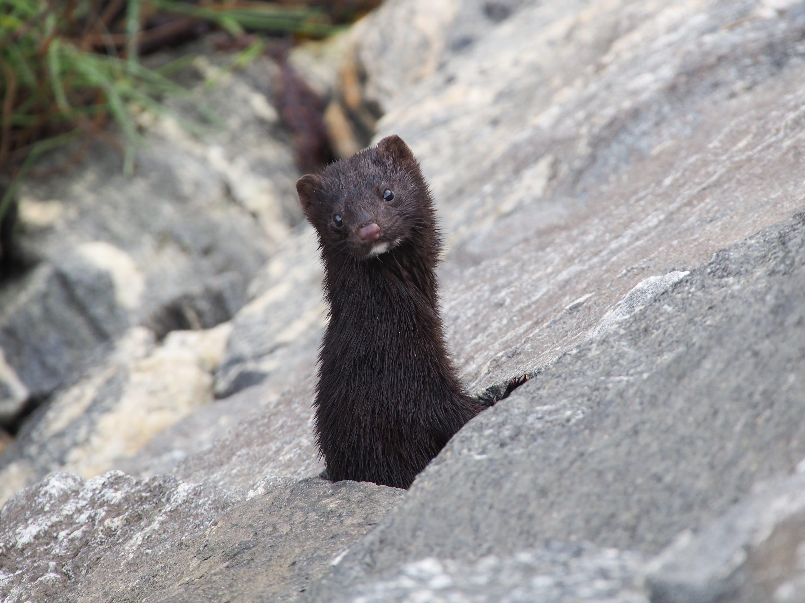 Free stock photo of animal, shore