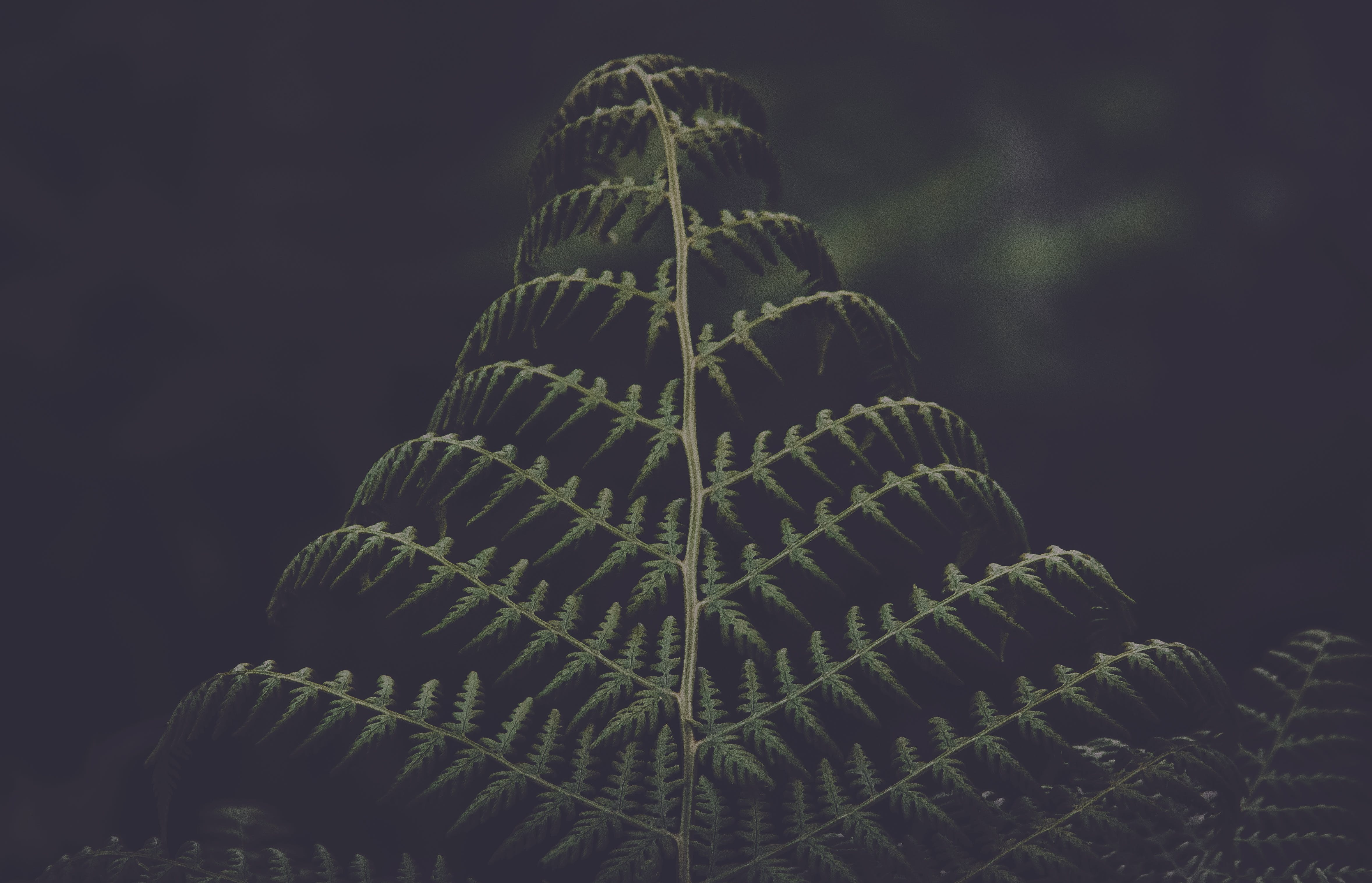 Low-light Photo Of Green Pinnate Leaf