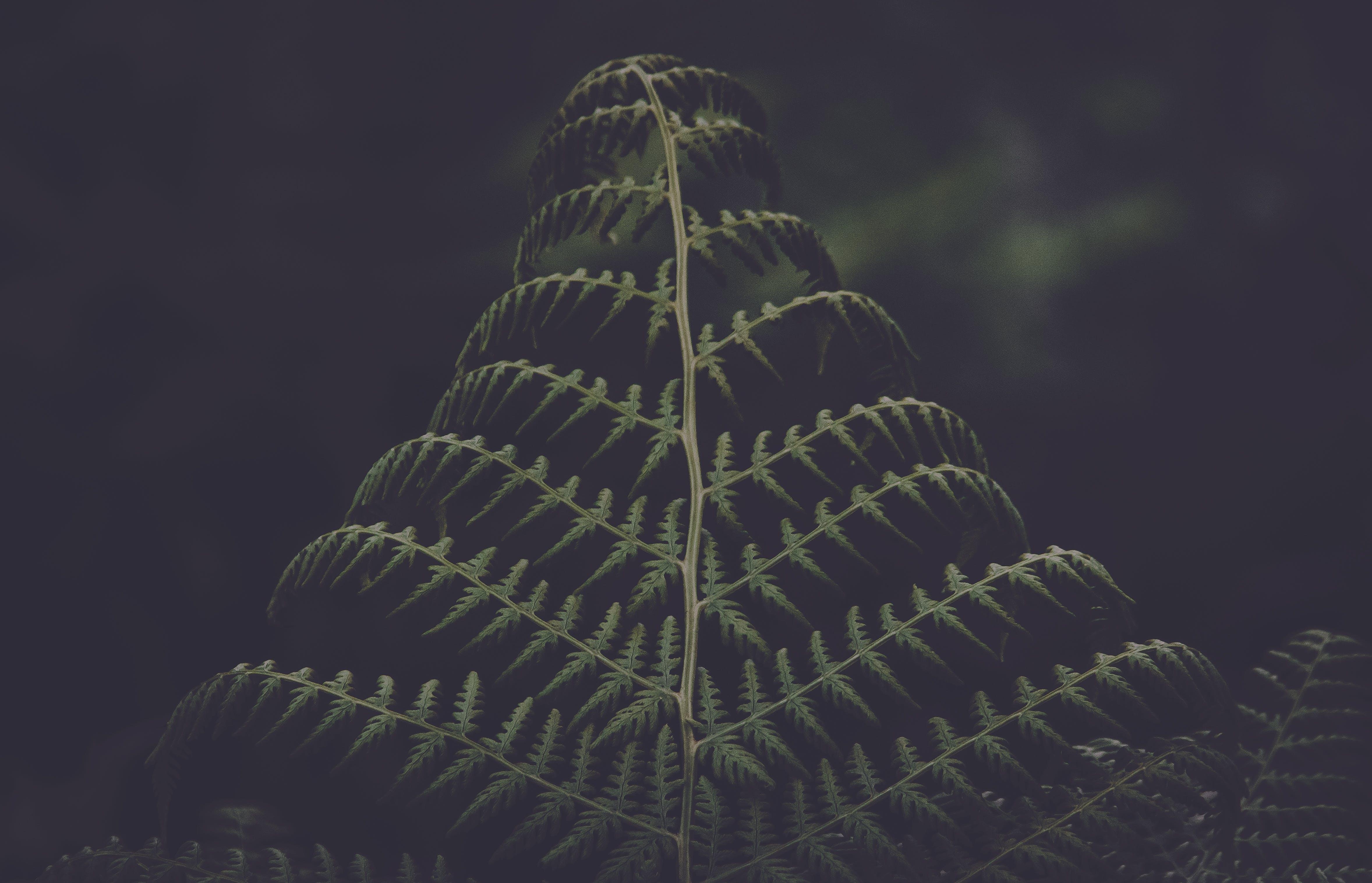 Low-light Photo Of Green Pinnate Leaf
