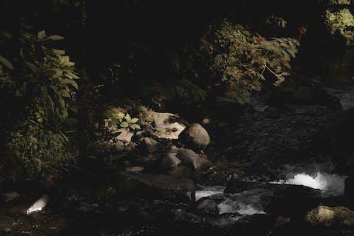 Gratis arkivbilde med miljø, natur, naturskjønn, regnskog