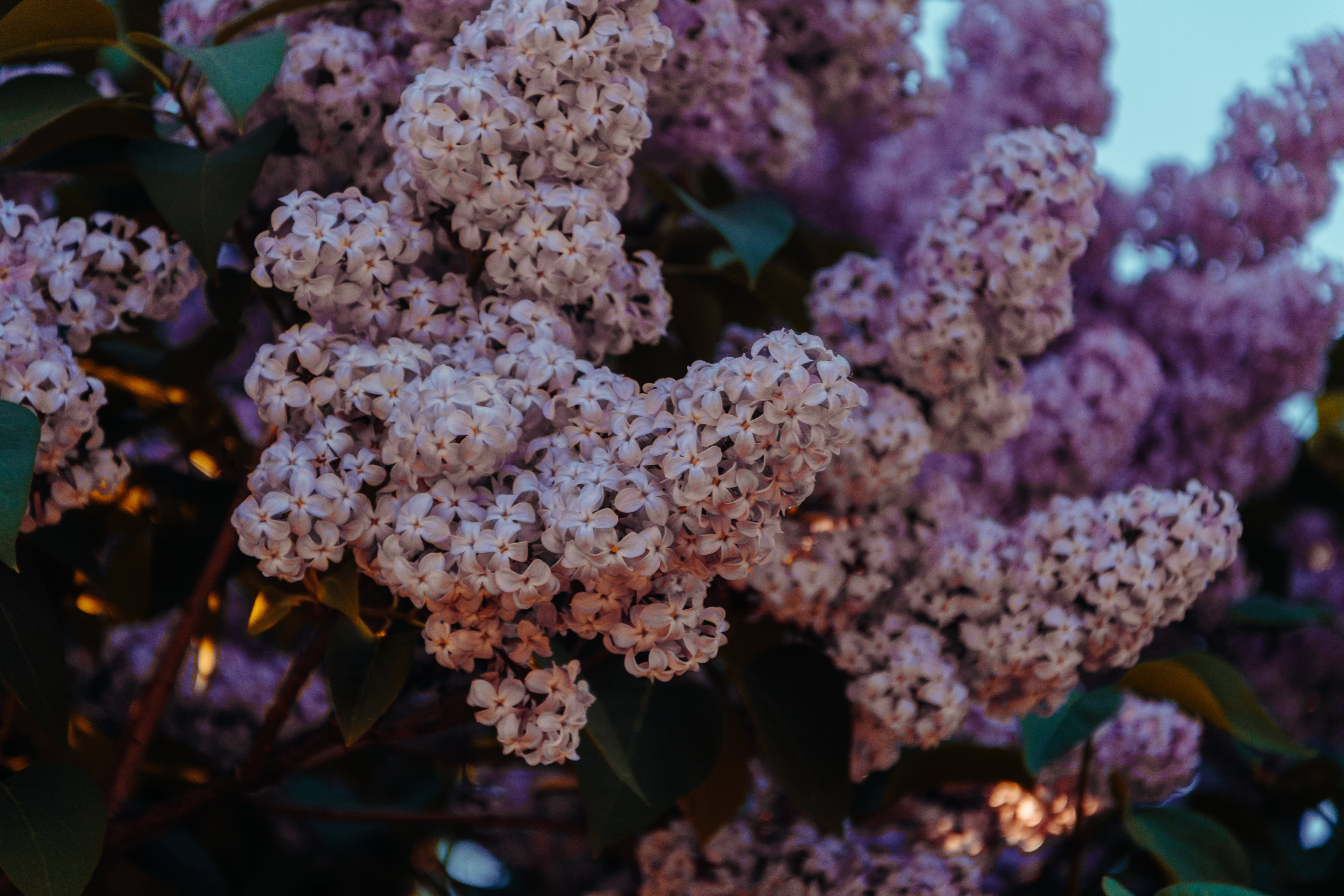 Purple And Pink Petaled Flowers