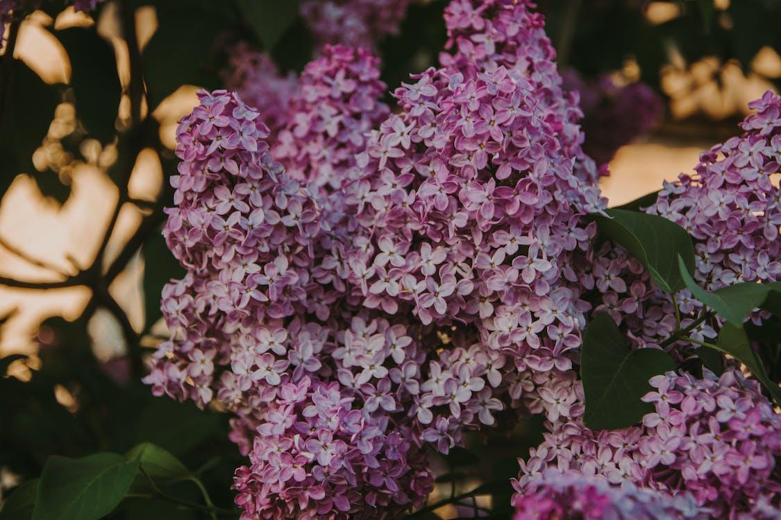 bloeien, bloem, bloemblaadjes