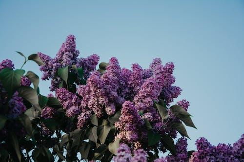 Foto profissional grátis de árvore, broto, flora, flores