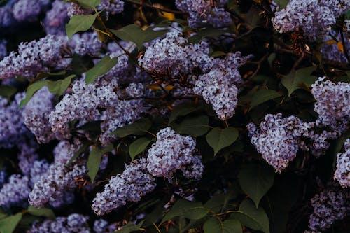Ilmainen kuvapankkikuva tunnisteilla kasvi, kasvikunta, kukat, kukinta