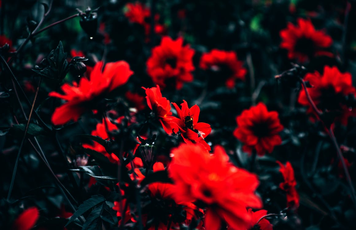 flor, flora, floración