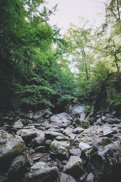 Foto profissional grátis de acampamento, amantes da natureza, ao ar livre, árvores