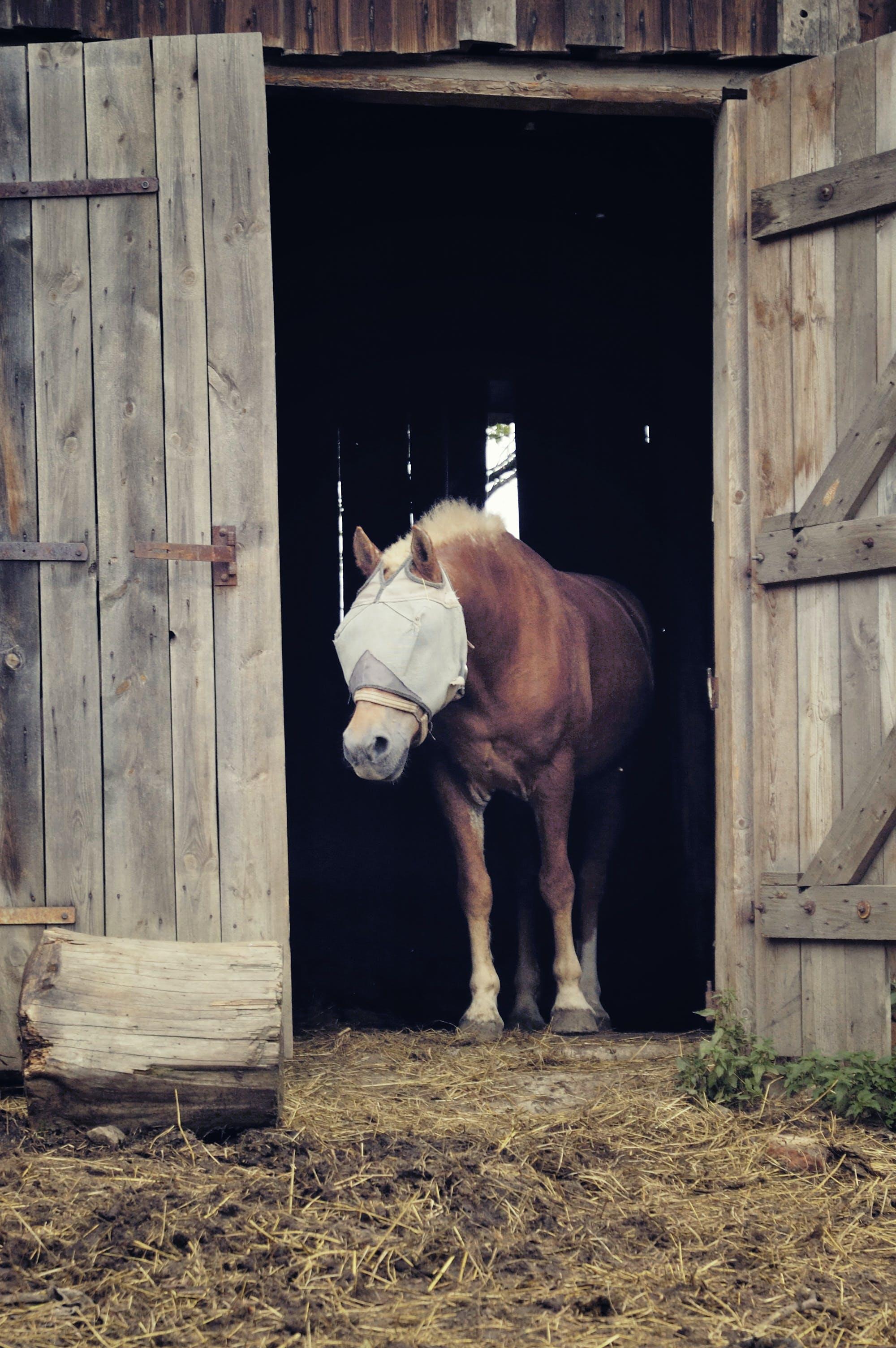 Free stock photo of animal, barn, brown, domestic animal