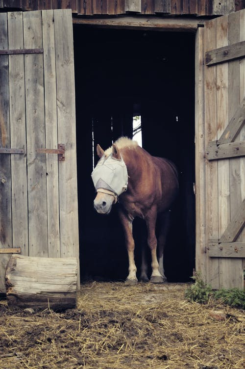 Fotos de stock gratuitas de animal, animal domestico, caballo, granero