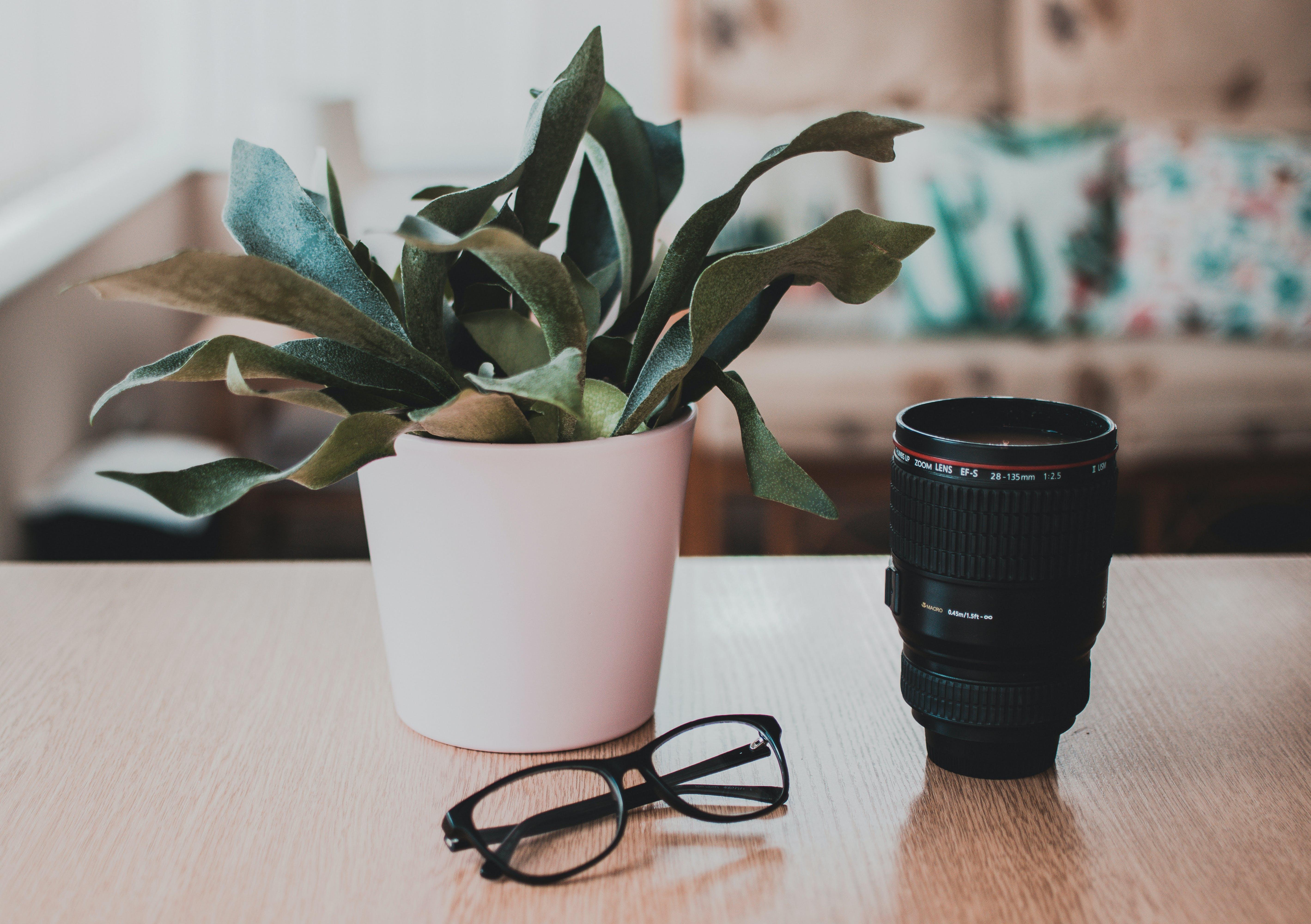 Kostenloses Stock Foto zu brille, brillen, pflanze