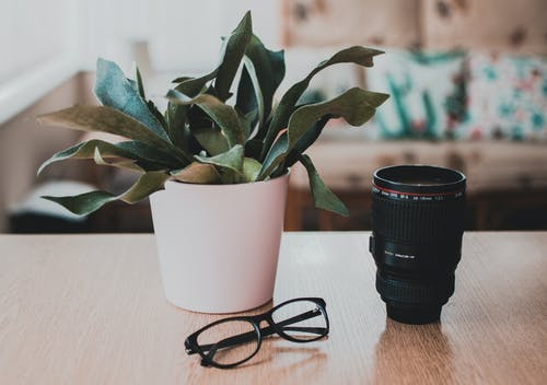 Fotobanka sbezplatnými fotkami na tému dioptrické okuliare, okuliare akontaktné šošovky, rastlina, rastlina vkvetináči
