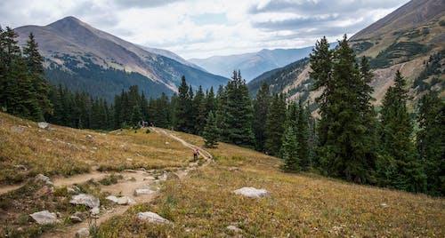 Foto stok gratis alam, alpine, batu, bukit