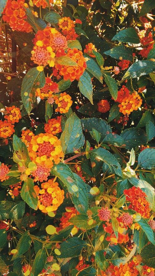 Δωρεάν στοκ φωτογραφιών με ταπετσαρία με λουλούδια, ταπετσαρία φύσης