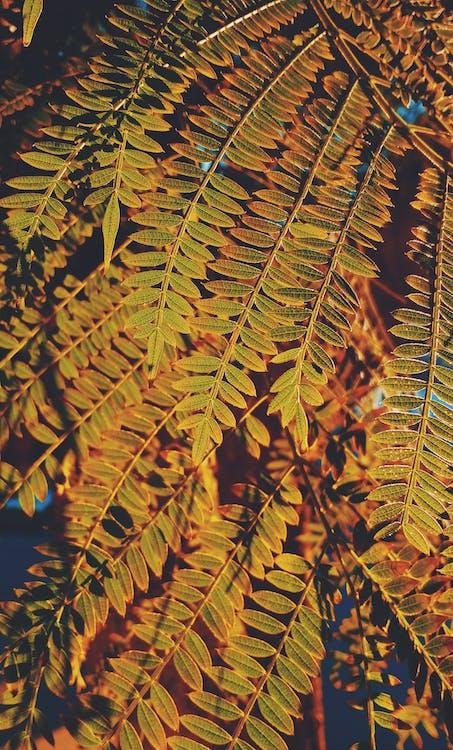 คลังภาพถ่ายฟรี ของ วอลล์เปเปอร์ Tumblr, วอลล์เปเปอร์ธรรมชาติ