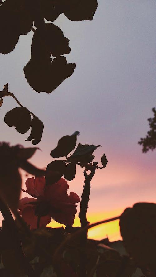 Δωρεάν στοκ φωτογραφιών με ταπετσαρία tumblr, ταπετσαρία με λουλούδια