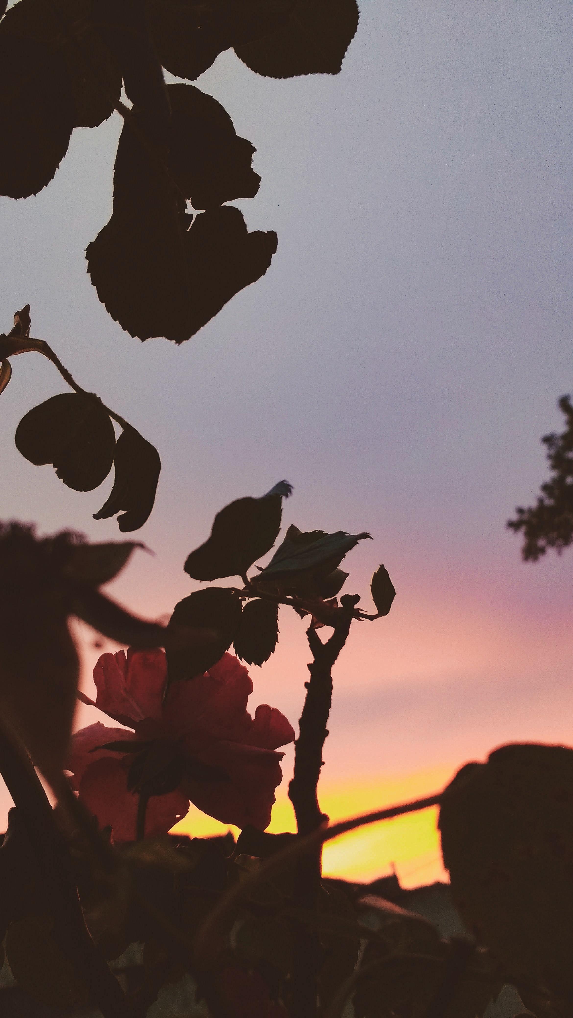 Photo Gratuite De Fond D Ecran Fleur Fond D Ecran Tumblr