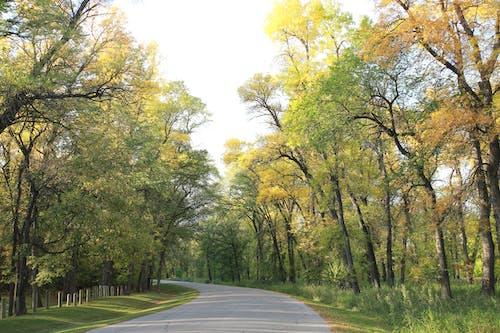 Gratis arkivbilde med ettermiddag, gul, park, park måte