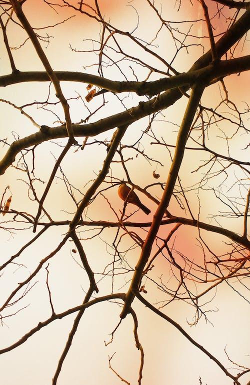 Δωρεάν στοκ φωτογραφιών με κλαδιά δέντρων, ταπετσαρία tumblr