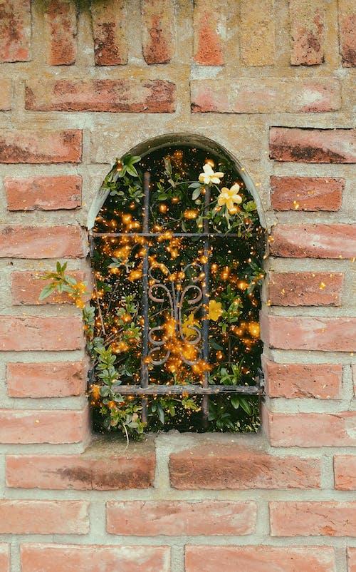 Foto stok gratis flora mekar, wallpaper tumblr