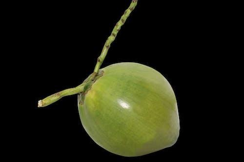 ココ, ココナッツ, パルム, フルーツの無料の写真素材