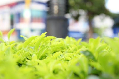 フォーカス, マクロ写真, 白黒, 緑色の葉の無料の写真素材