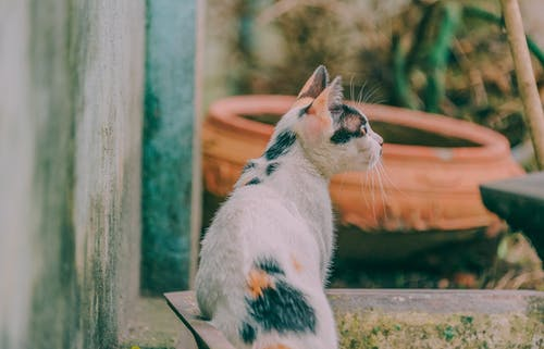 Calico Cat Beside Gray Wall