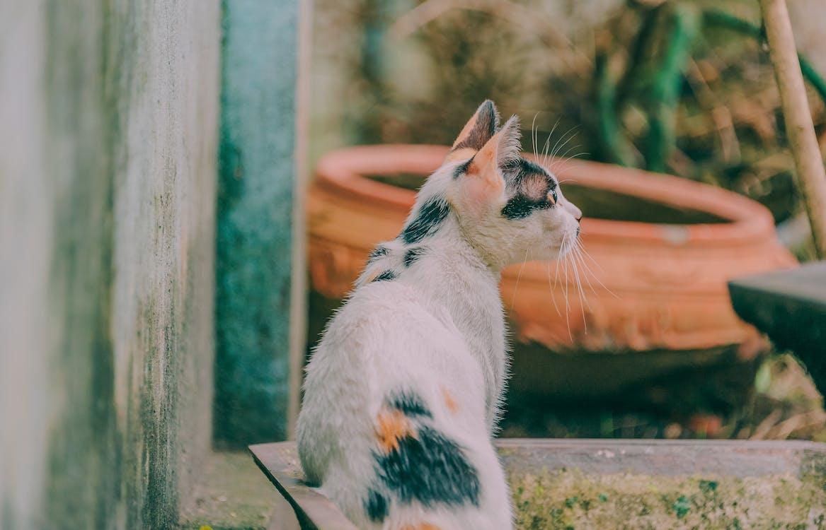 dyr, dyrefotografering, hjemlig