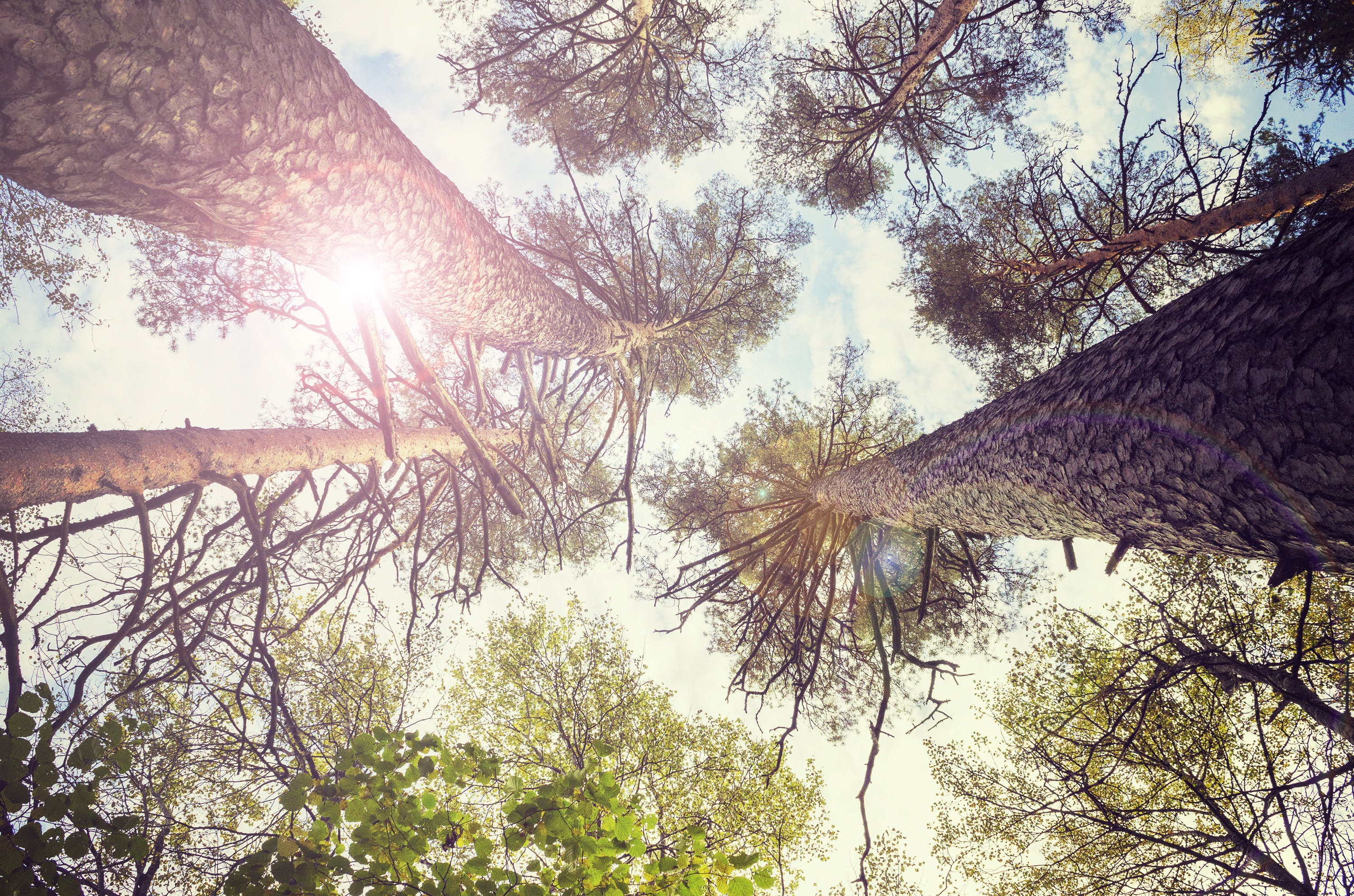 Free stock photo of blue skies, blue sky, flare, forest