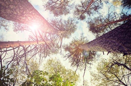 Ingyenes stockfotó erdő, fellobbanás, felülről, fenyő témában