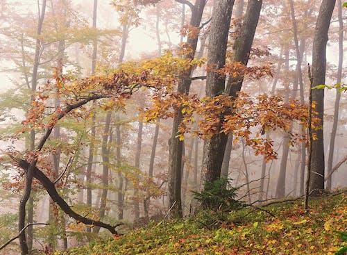 Foto d'estoc gratuïta de tardor al bosc
