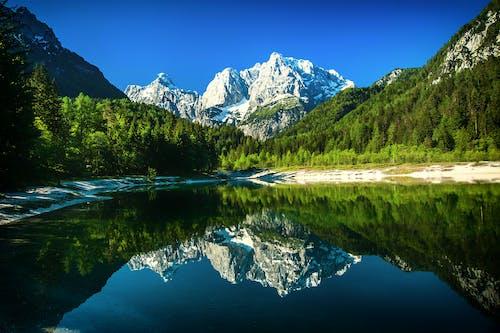 Foto d'estoc gratuïta de aigua, arbres, boscos, Fons de pantalla HD