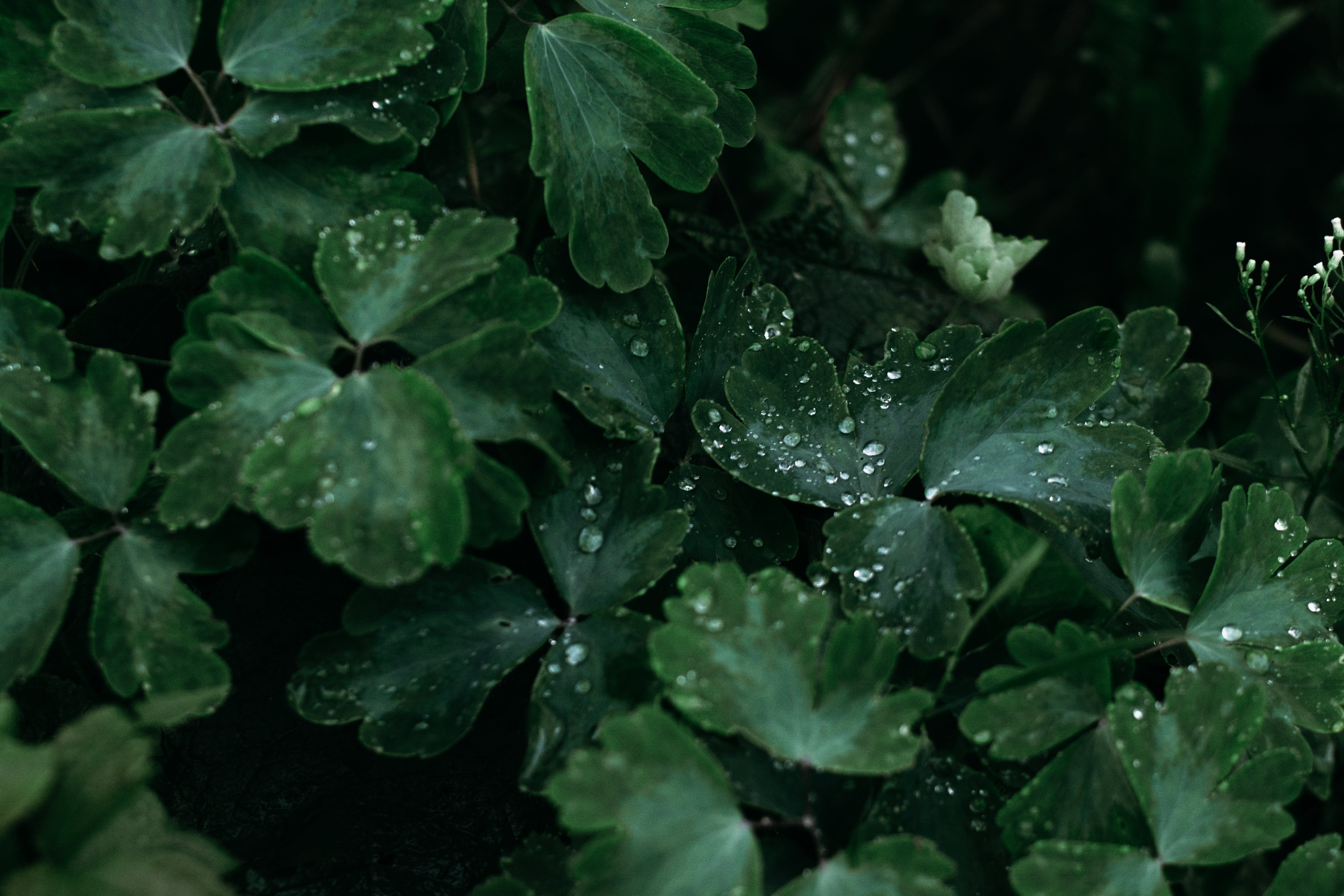 Green Leaves in Macro Shot Photography