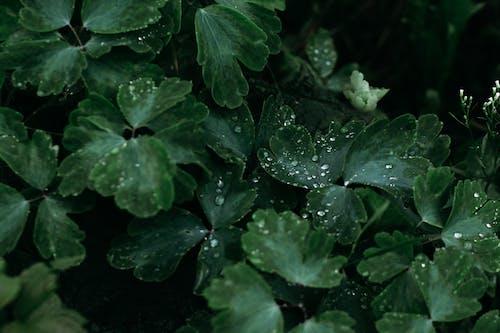 Darmowe zdjęcie z galerii z ciemnozielony, deszcz, kolory, krople deszczu