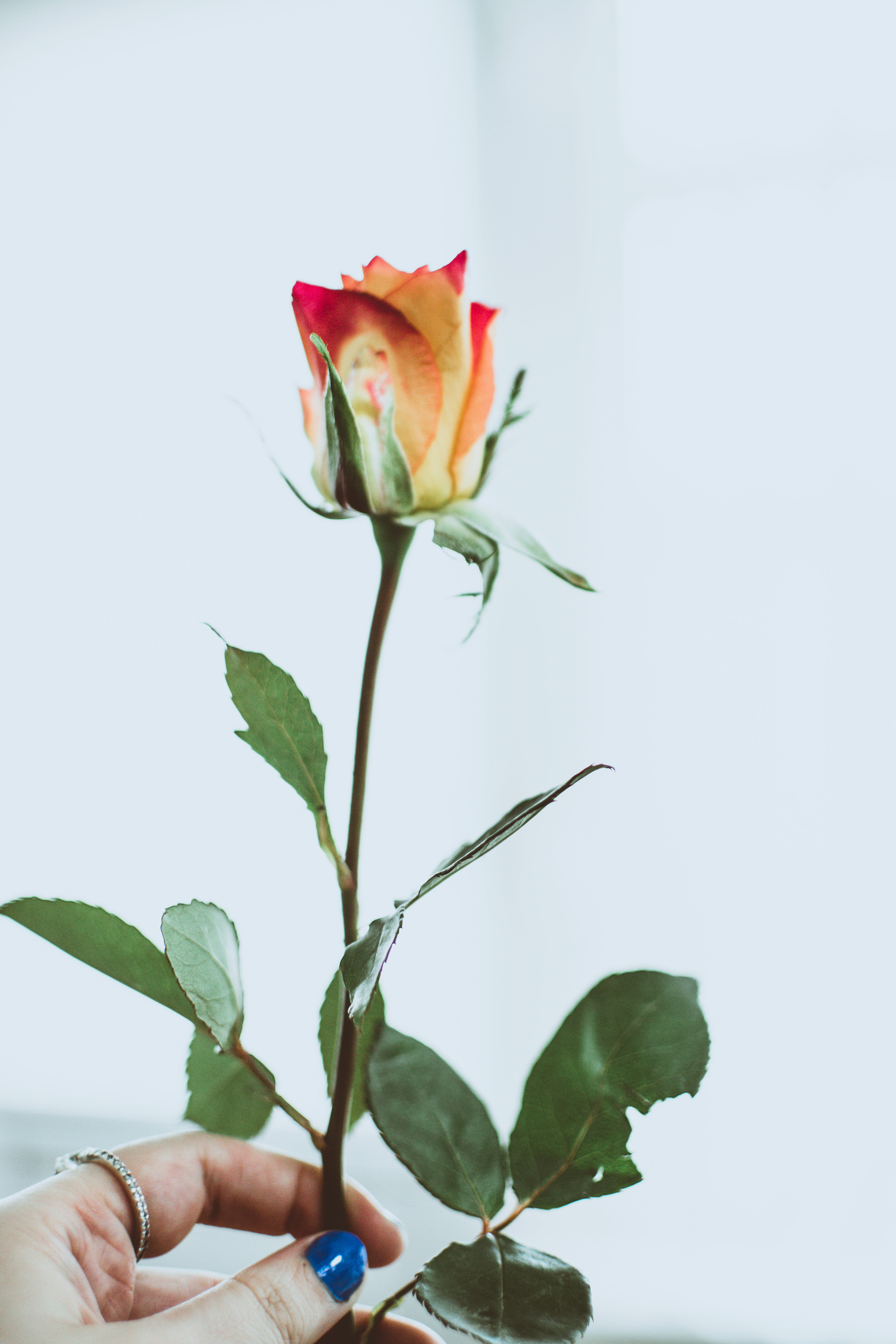 Close-Up Photography of Person Holding Flower