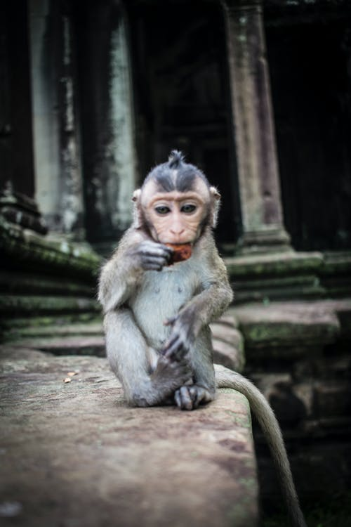 Immagine gratuita di ankor, ankorwat, cambogia, camboya