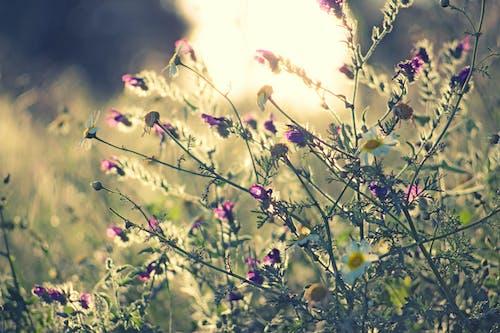 Gratis lagerfoto af blomster, flora, græs, have