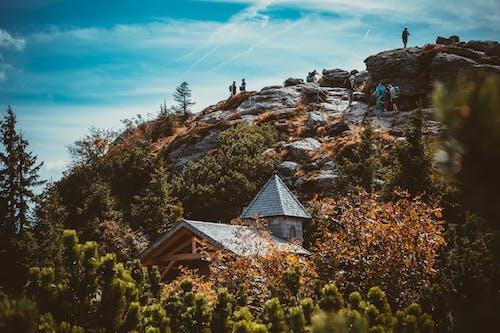 Безкоштовне стокове фото на тему «гора, Денне світло, дерева, краєвид»