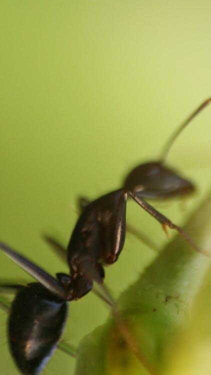 Photos gratuites de fourmi, photographie de la faune, sauvage