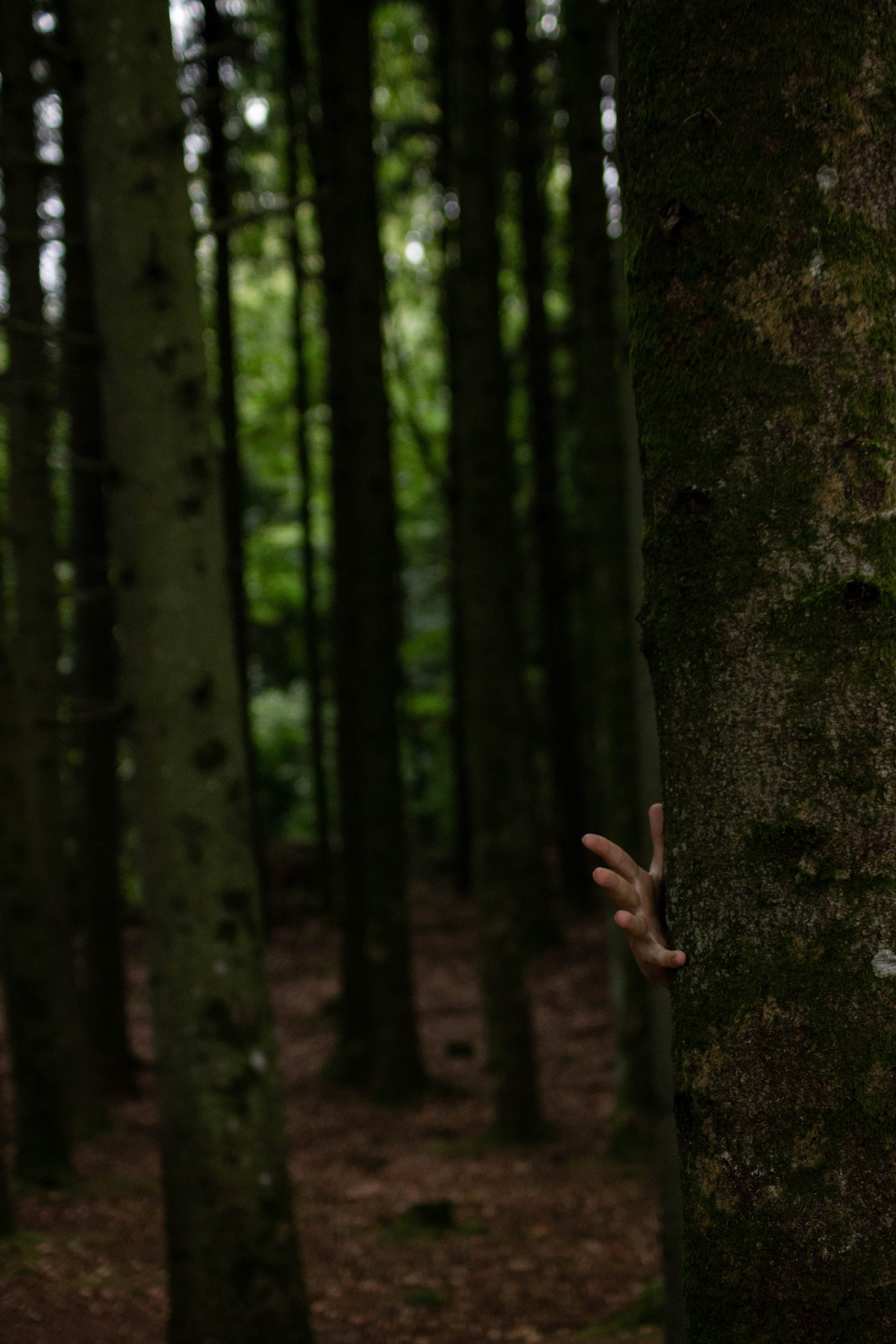 Free stock photo of dark, fingers, forest, hand