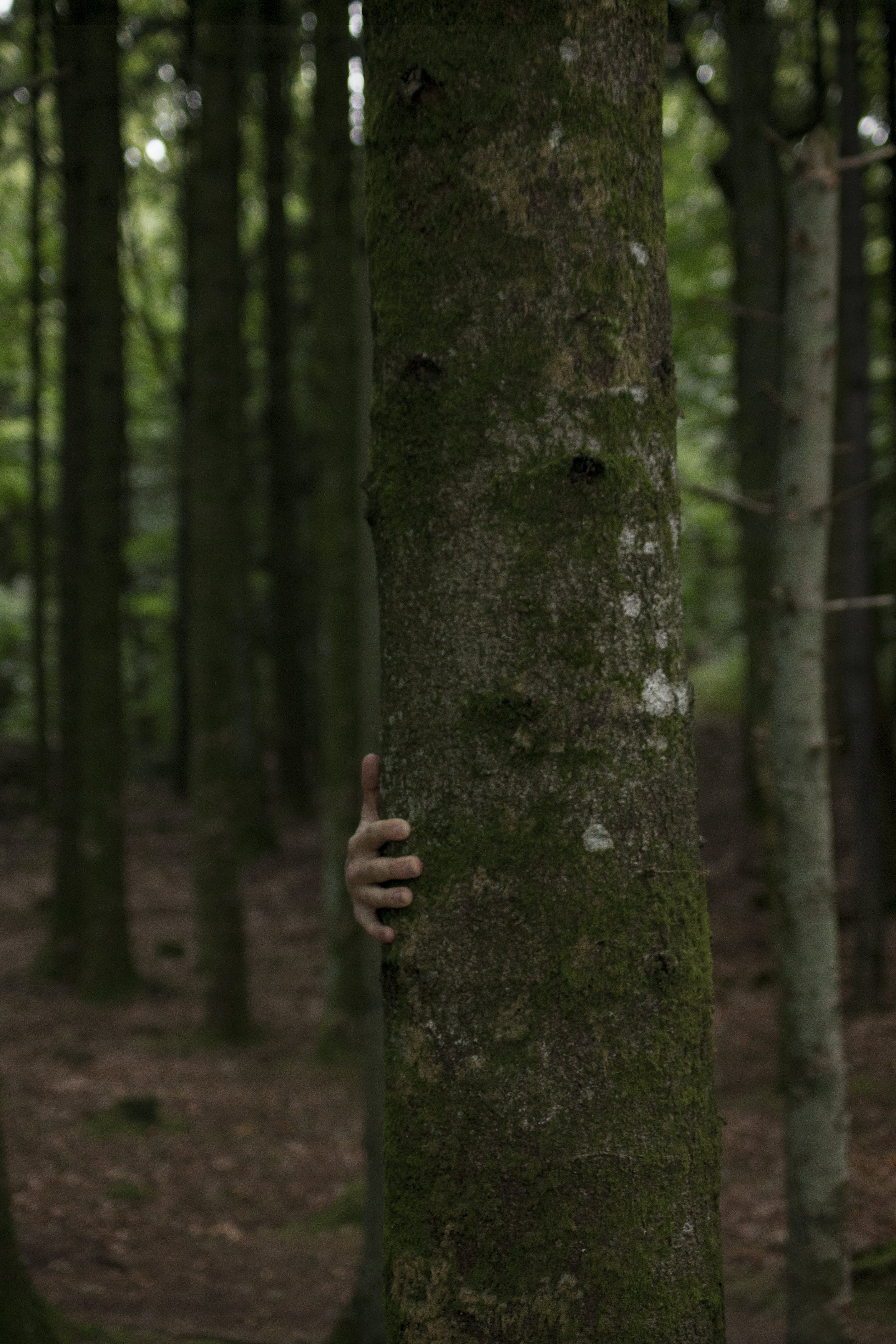 Person Hiding Behind Tree Trunk